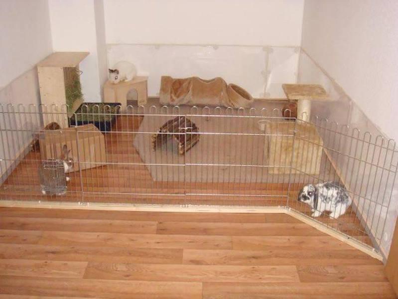 animal sos hofstetten innenhaltung. Black Bedroom Furniture Sets. Home Design Ideas