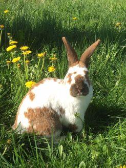 Kaninchen Nala